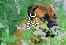 Pet Friendly Weed Killers