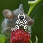 home remedies for mice